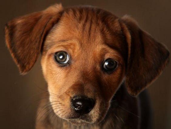 sguardo-cane