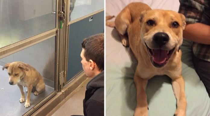 20 foto animali prima e dopo adozione