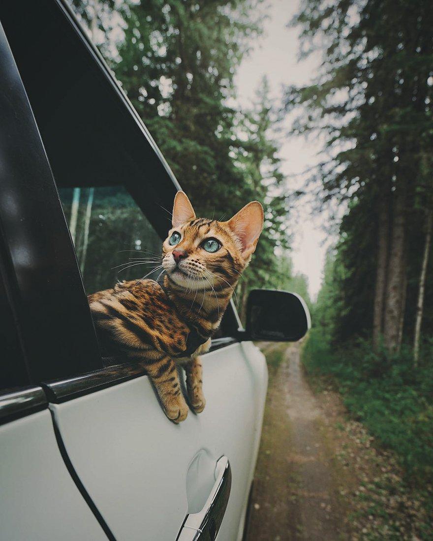 Suki gatto viaggiatore