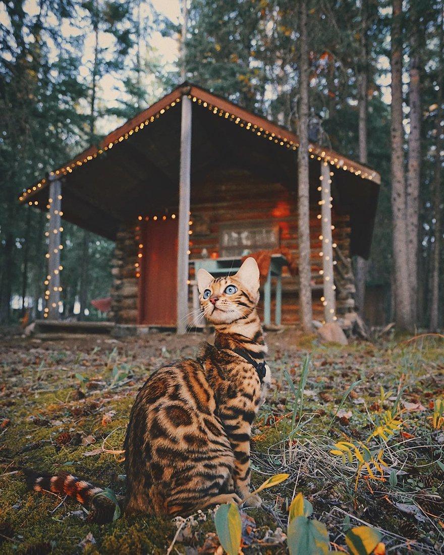 Suki gatto viaggiatore2