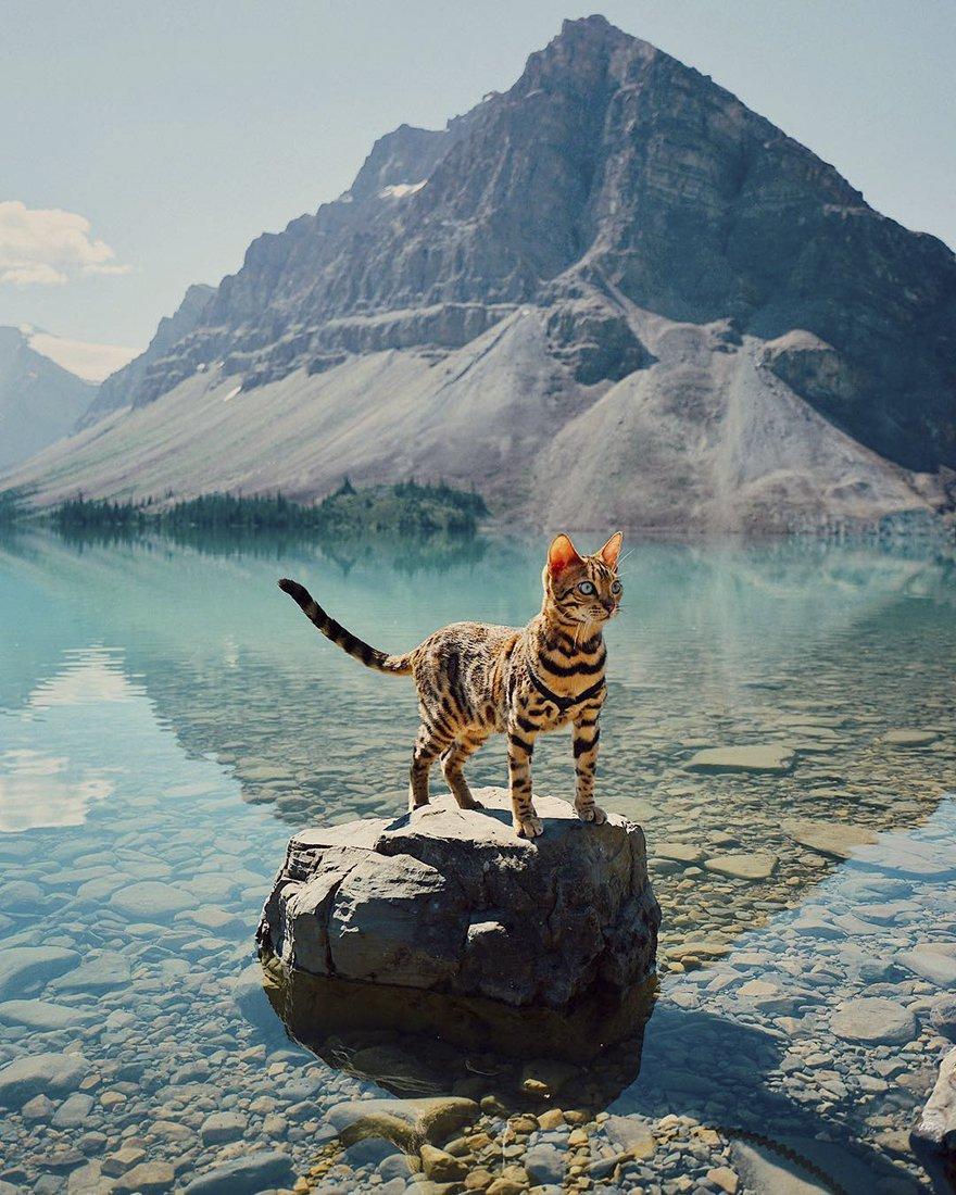 Suki gatto viaggiatore6