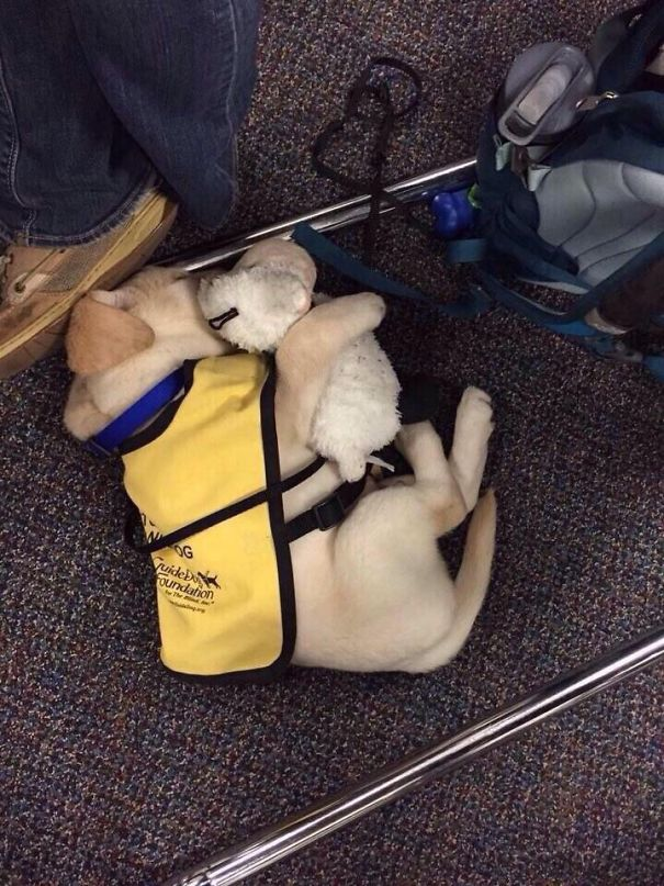 adorable puppies on their first day at work1