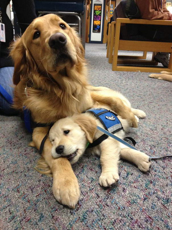 adorable puppies on their first day at work2
