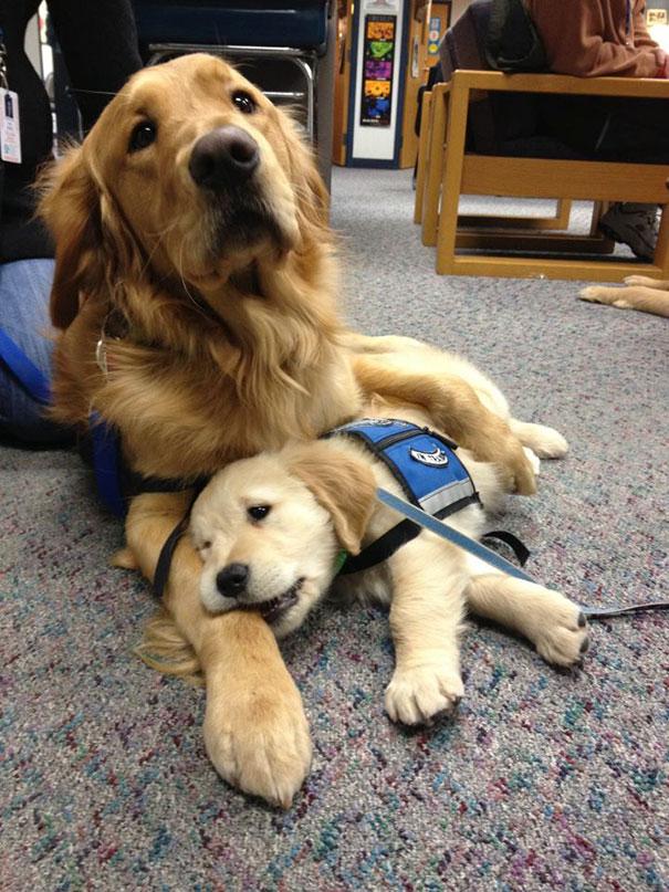 adorabili cuccioli al primo giorno di lavoro2
