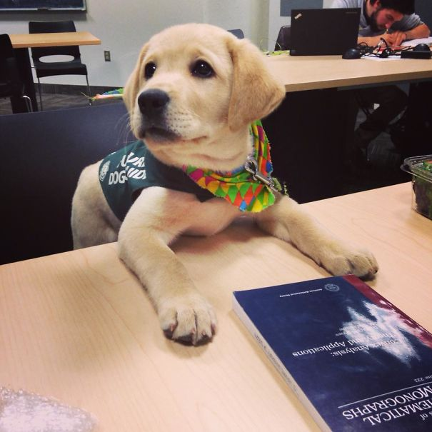 adorable puppies on their first day at work7