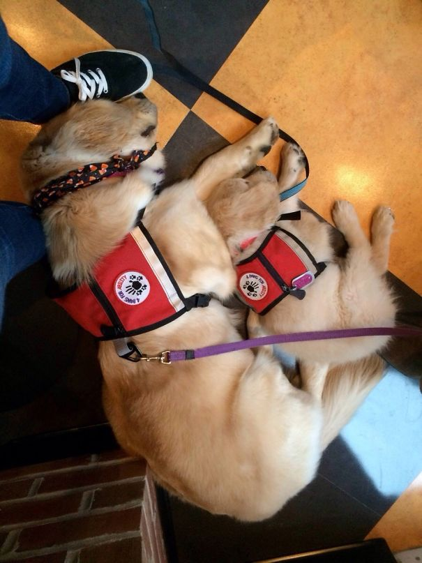 adorable puppies on their first day at work8