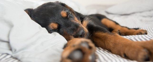 cane da solo in casa dorme su letto