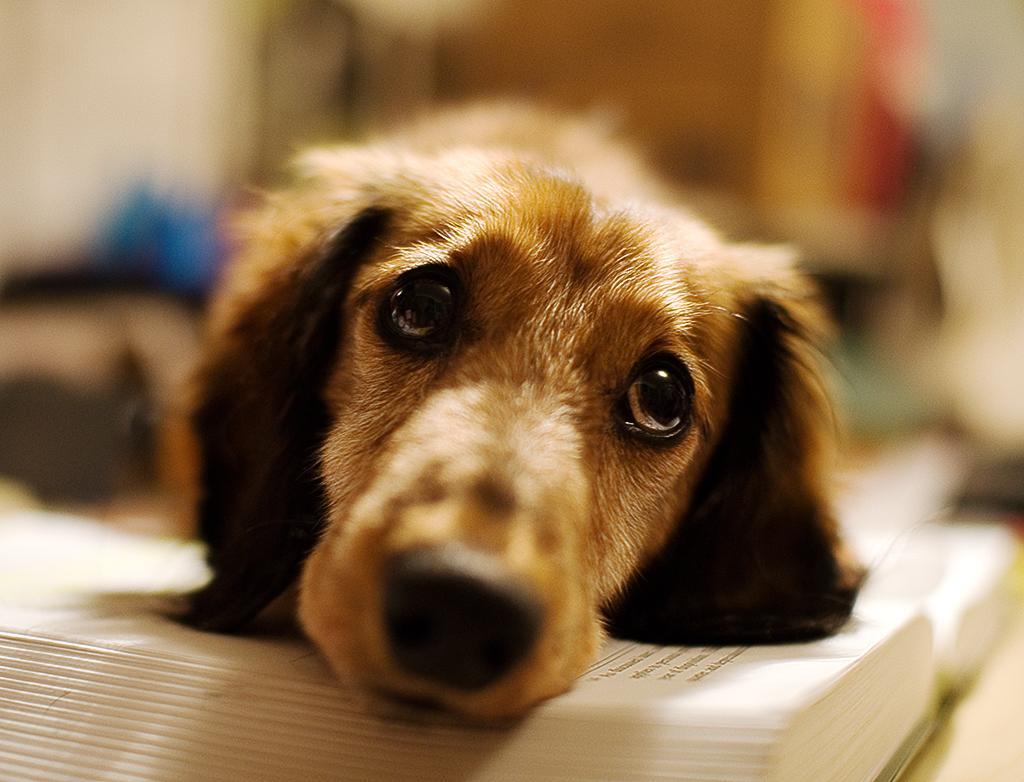 cane da solo in casa triste