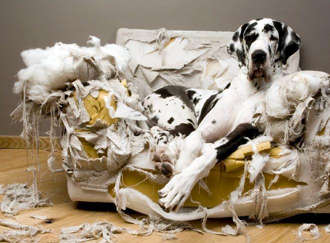 cane da solo in casa