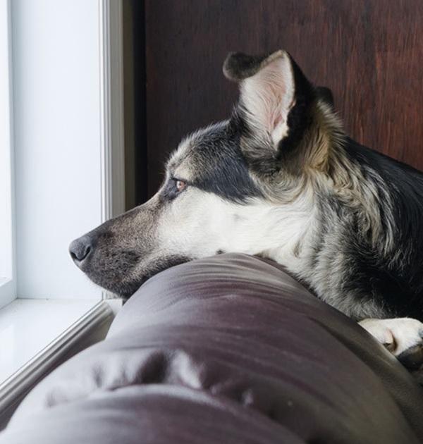 cane da solo in casa1