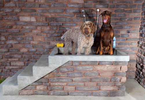 arredamenti per cani design4