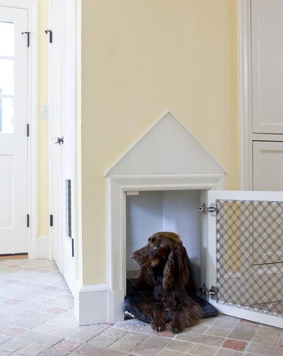 arredamenti per cani design9