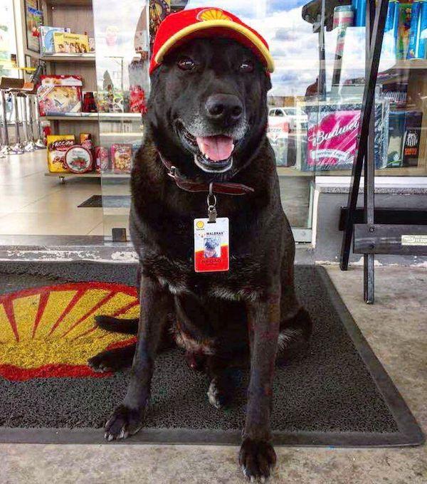 cane impiegato in una stazione di servizio