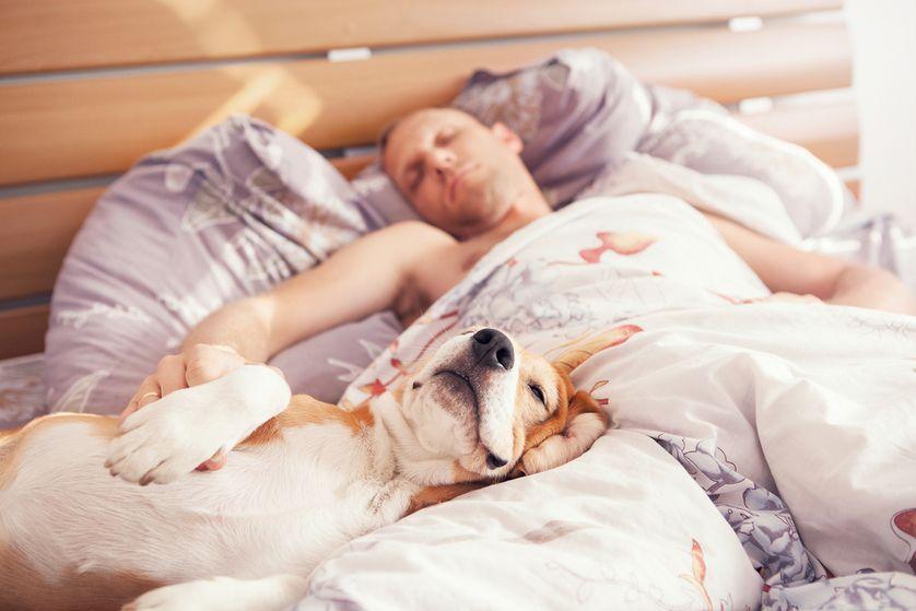 dormire con il cane benefici