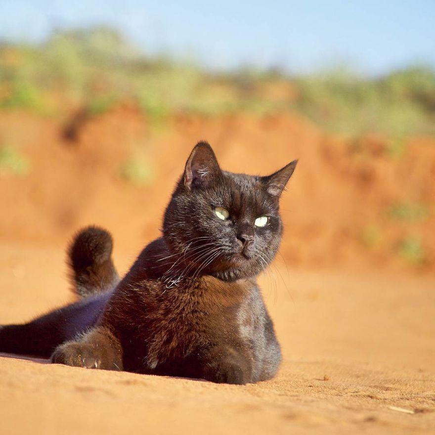 fa il giro dell'Australia con gatto in camper5