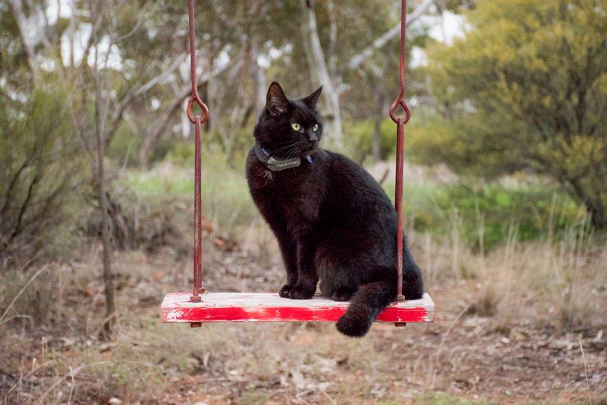 fa il giro dell'Australia con gatto in camper6