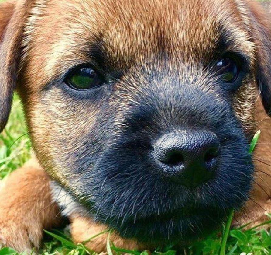 foto cani senza collare per onorare morte cucciolo Rocco