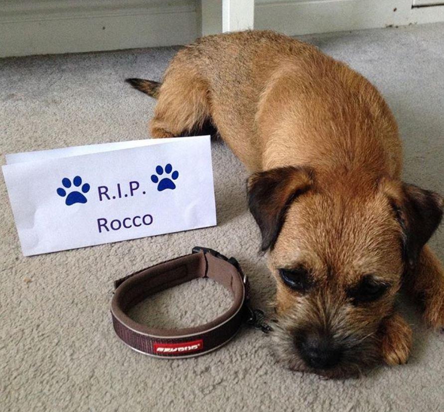foto cani senza collare per onorare morte cucciolo Rocco1