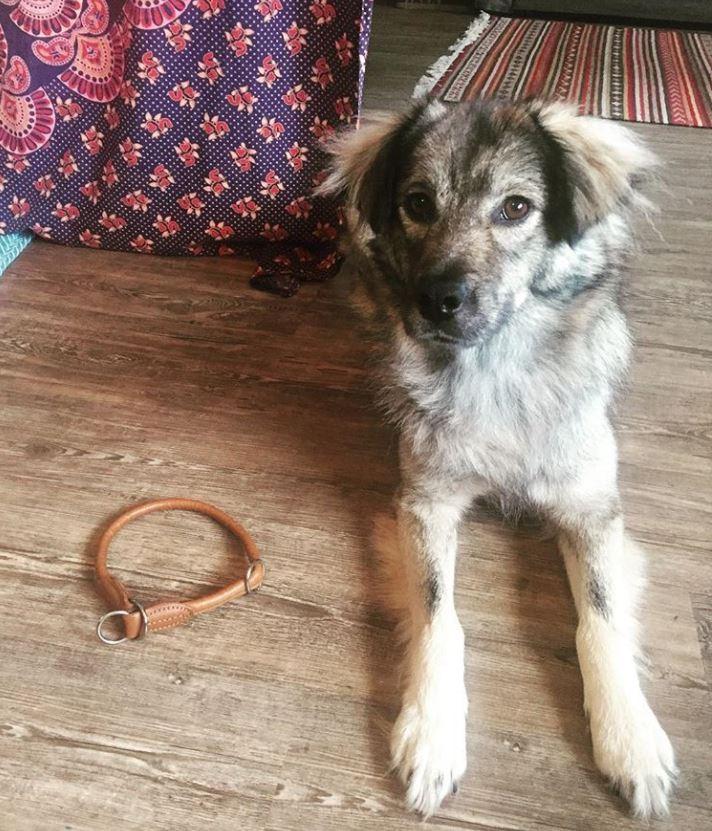 foto cani senza collare per onorare morte cucciolo Rocco2