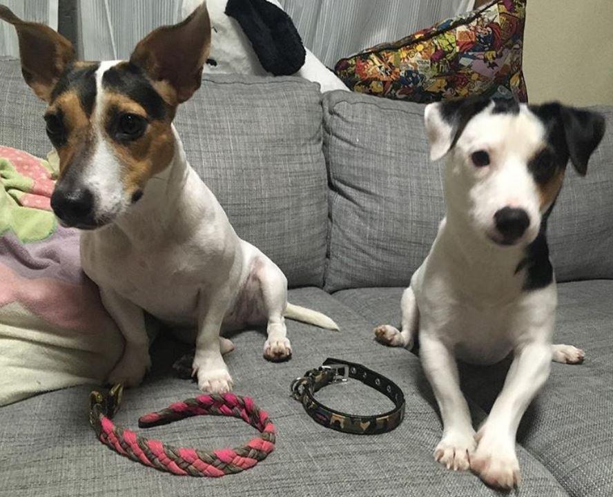 foto cani senza collare per onorare morte cucciolo Rocco3
