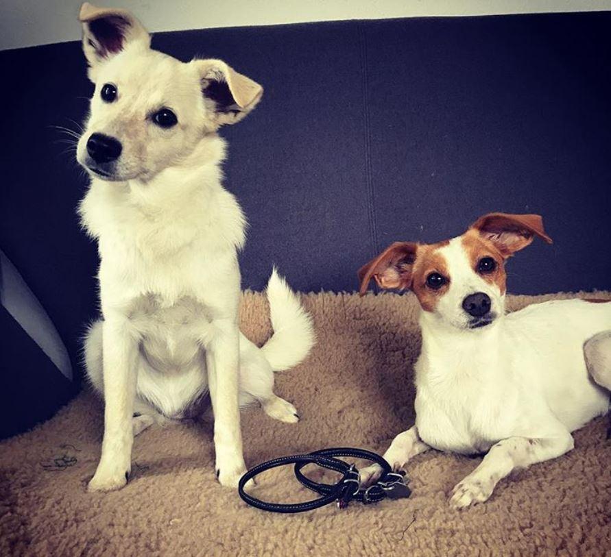 foto cani senza collare per onorare morte cucciolo Rocco4