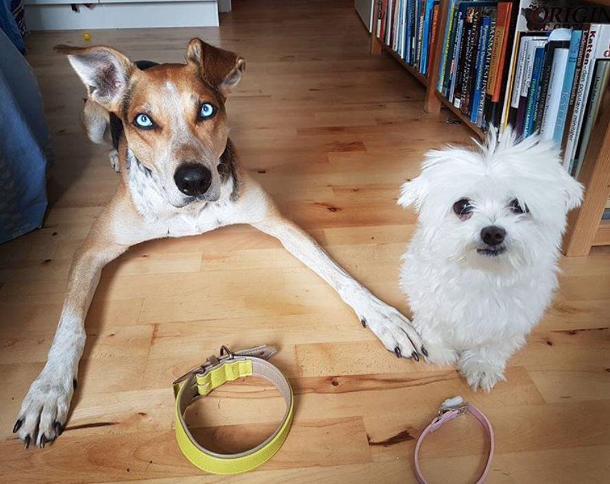 foto cani senza collare per onorare mor