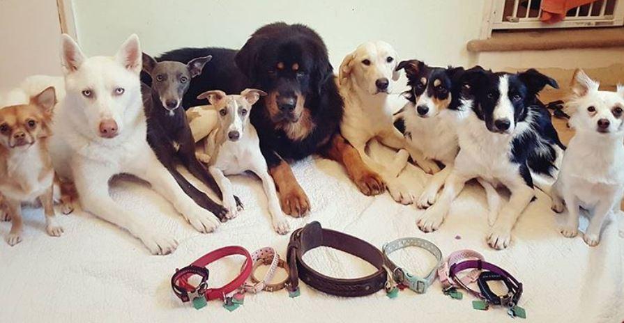 foto cani senza collare per onorare morte cucciolo Rocco6
