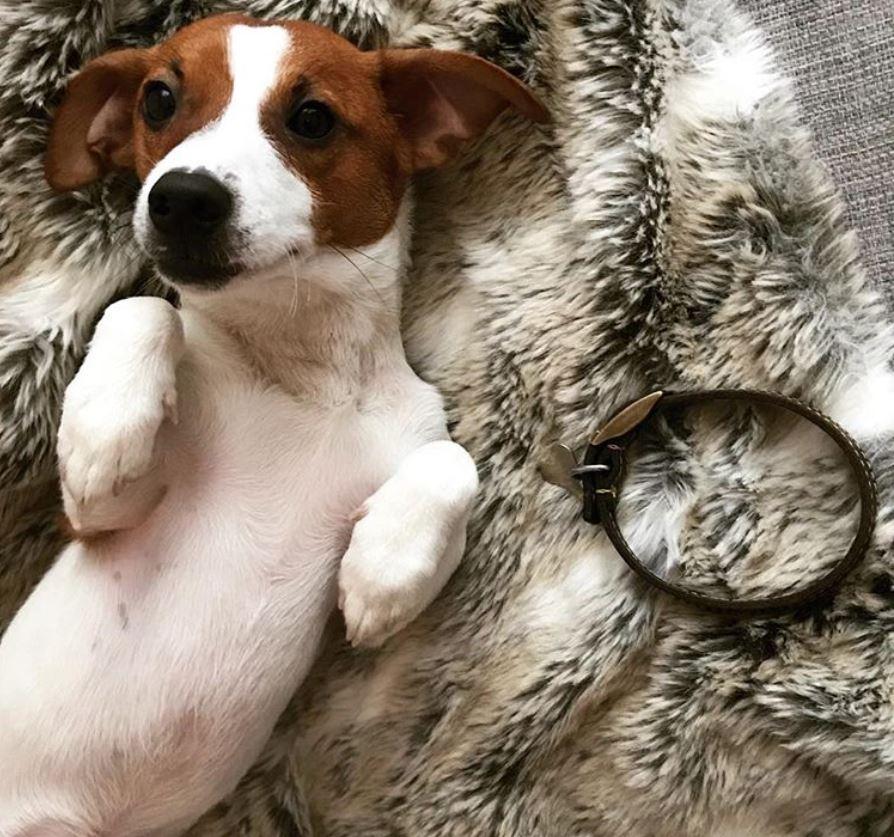 foto cani senza collare per onorare morte cucciolo Rocco7