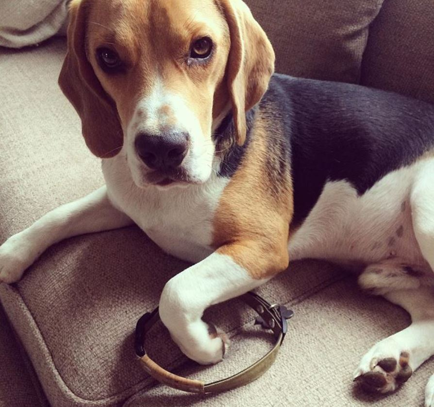 photo dogs without collar to honor death puppy Rocco8