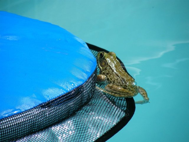 froglog invenzione per animali in piscina