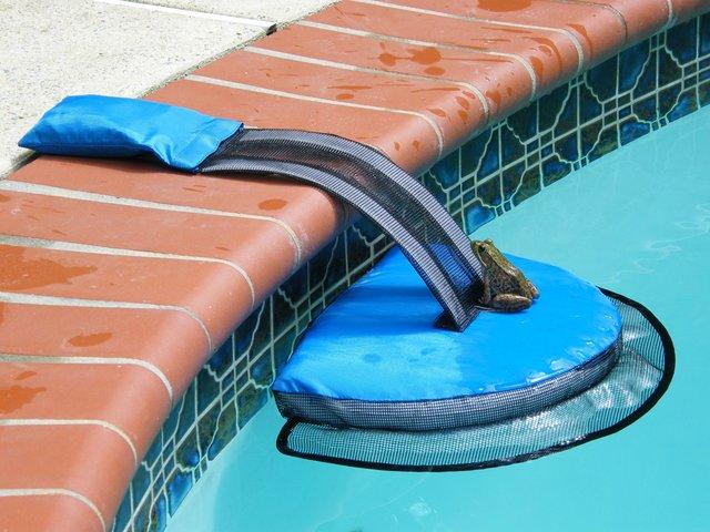froglog invenzione per animali in piscina1
