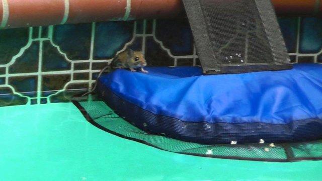 froglog invenzione per animali in piscina2