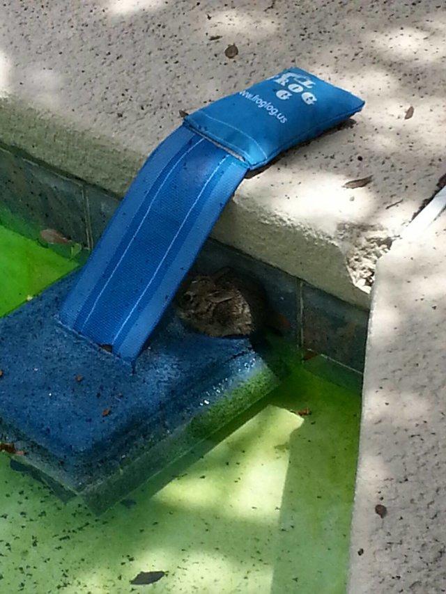 froglog invenzione per animali in piscina3