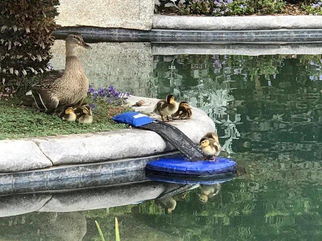 froglog invenzione per animali in piscina4