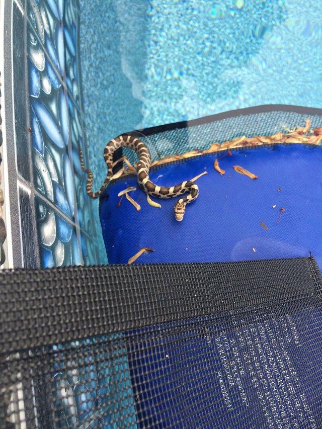 froglog invenzione per animali in piscina6