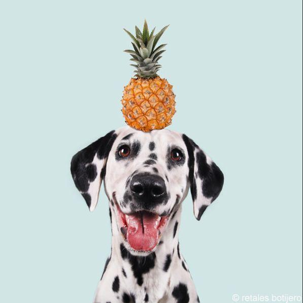 frutti che i cani possono mangiare10