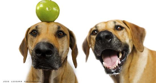 frutti che i cani possono mangiare4