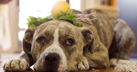 frutti che i cani possono mangiare8