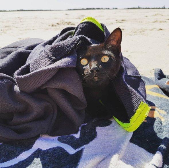 gatto passione per il nuoto5