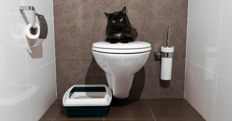 perché i gatti ci fissano durante intimità