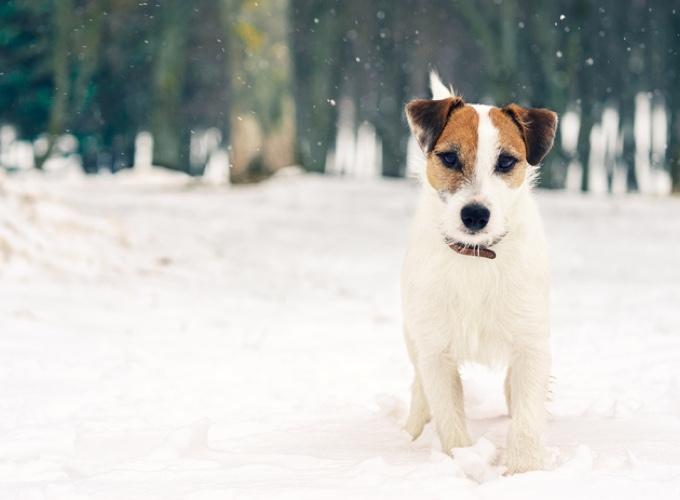 legge pennsylvania contro cani fuori al freddo