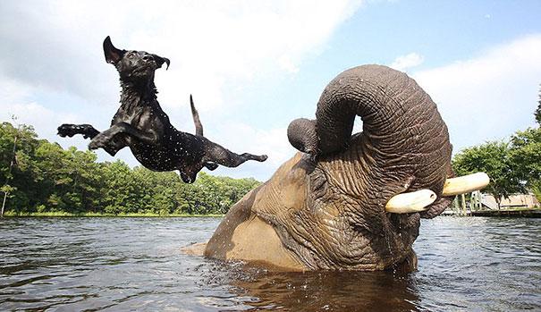 amicizia interspecie animali