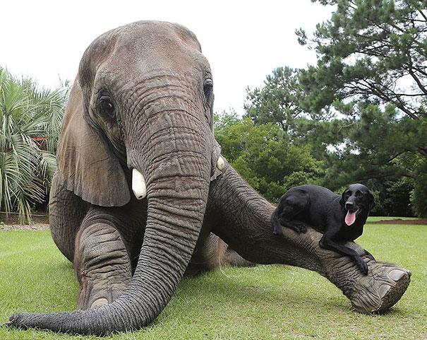 amicizia interspecie animali1