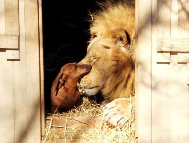 amicizia interspecie animali12