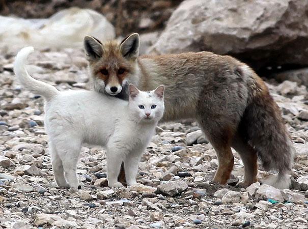 amicizia interspecie animali14