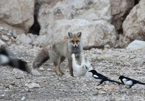amicizia interspecie animali15