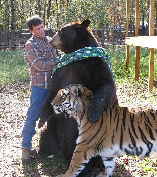 amicizia interspecie animali16