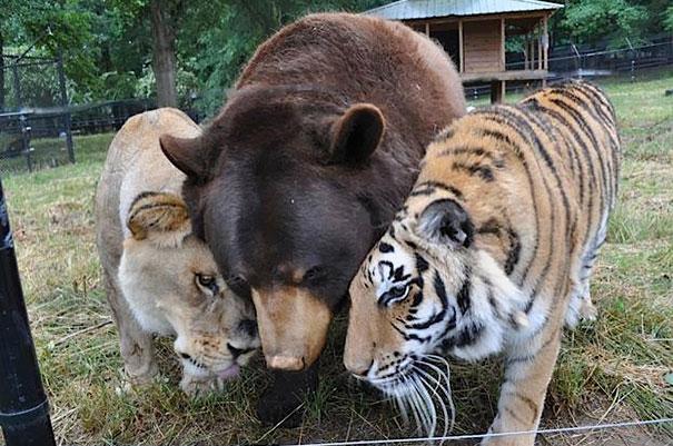 amicizia interspecie animali17