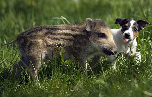 amicizia interspecie animali18