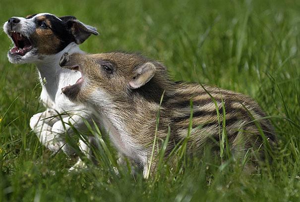 amicizia interspecie animali19